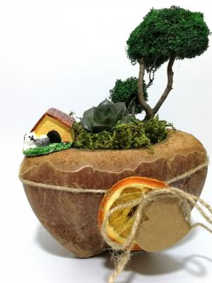 Hindistan Cevizi Saksılı Minyatür Bahçede Sukulent - Cocos