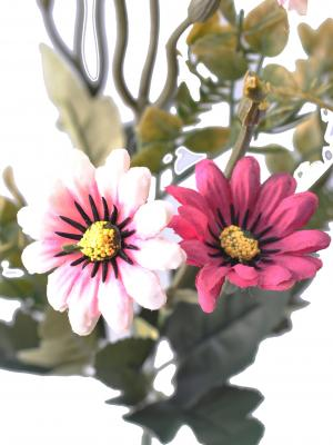 5 Dallı 33 cm Papatya Demeti Kırmızı Beyaz-CK013KB